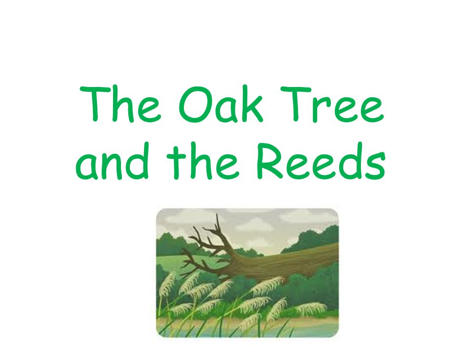 The Oak Tree and the Reeds
