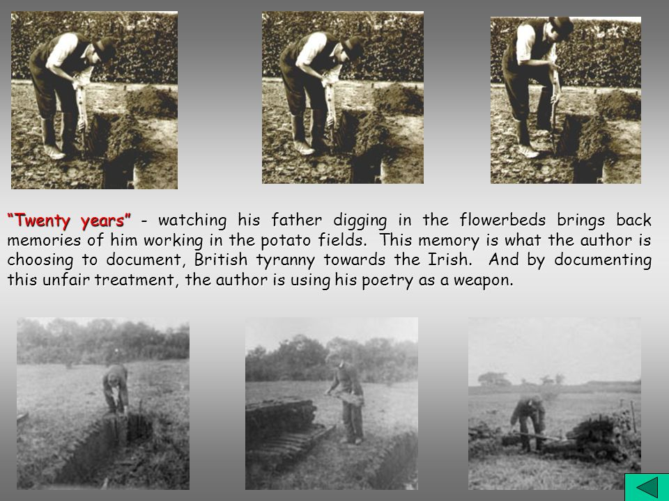 Twenty years - watching his father digging in the flowerbeds brings back memories of him working in the potato fields.