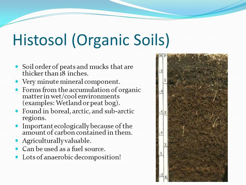 Histosol (Organic Soils)