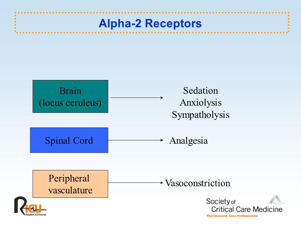Alpha-2 Receptors Brain Sedation (locus ceruleus) Anxiolysis