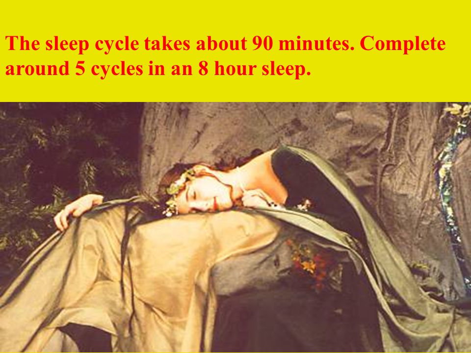 The sleep cycle takes about 90 minutes