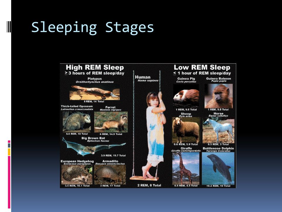 Sleeping Stages