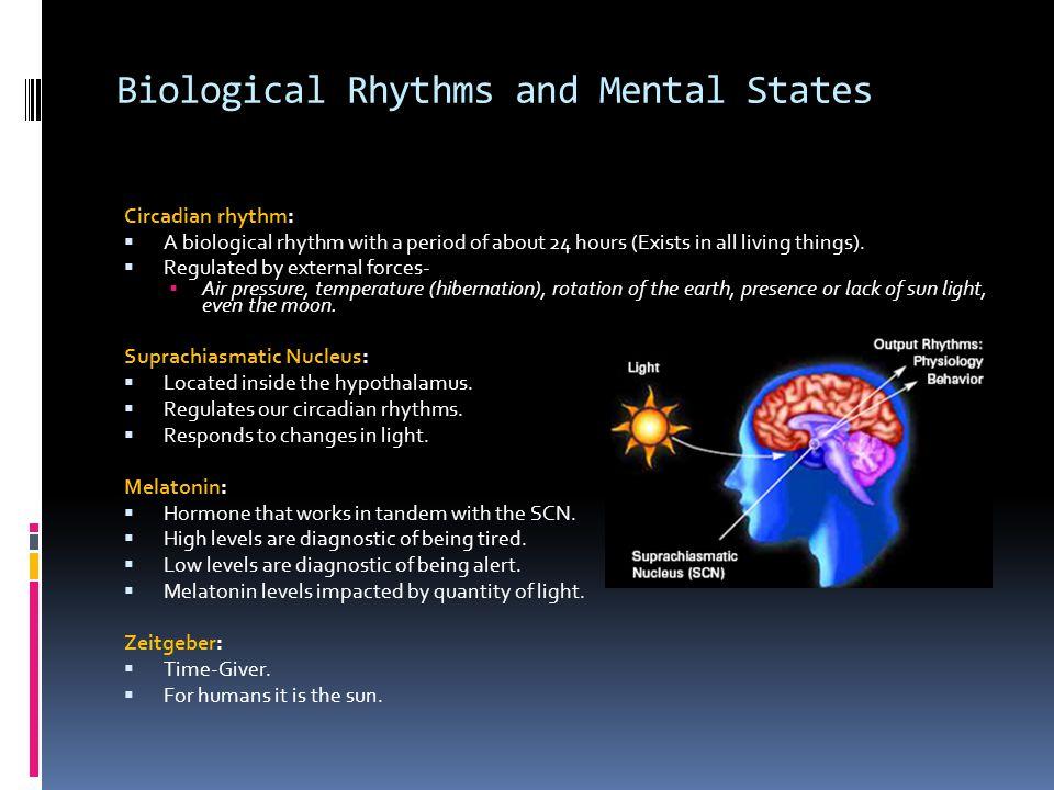 Biological Rhythms and Mental States