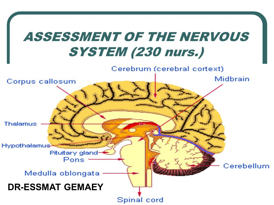 ASSESSMENT OF THE NERVOUS SYSTEM (230 nurs.)