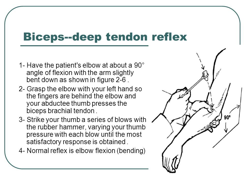 Biceps--deep tendon reflex
