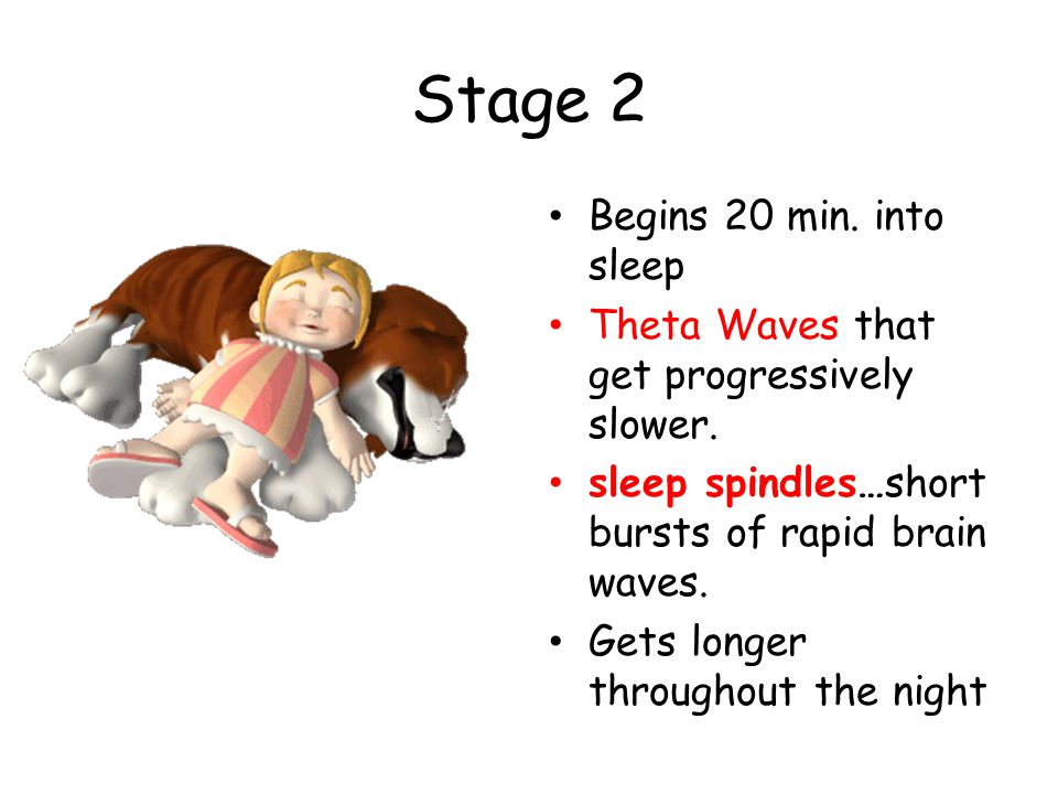 Stage 2 Begins 20 min. into sleep