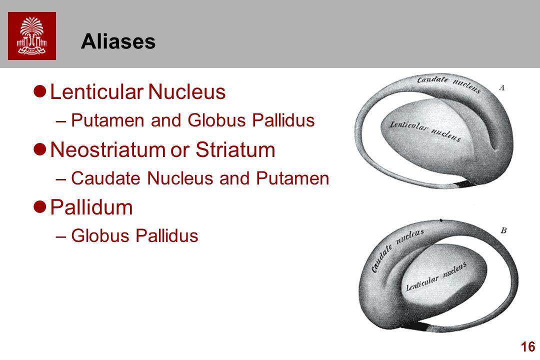 Neostriatum or Striatum Pallidum