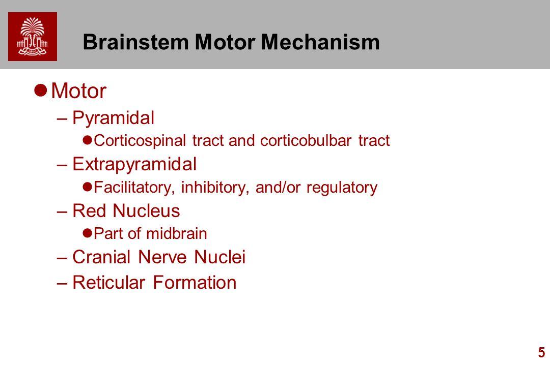 Brainstem Motor Mechanism