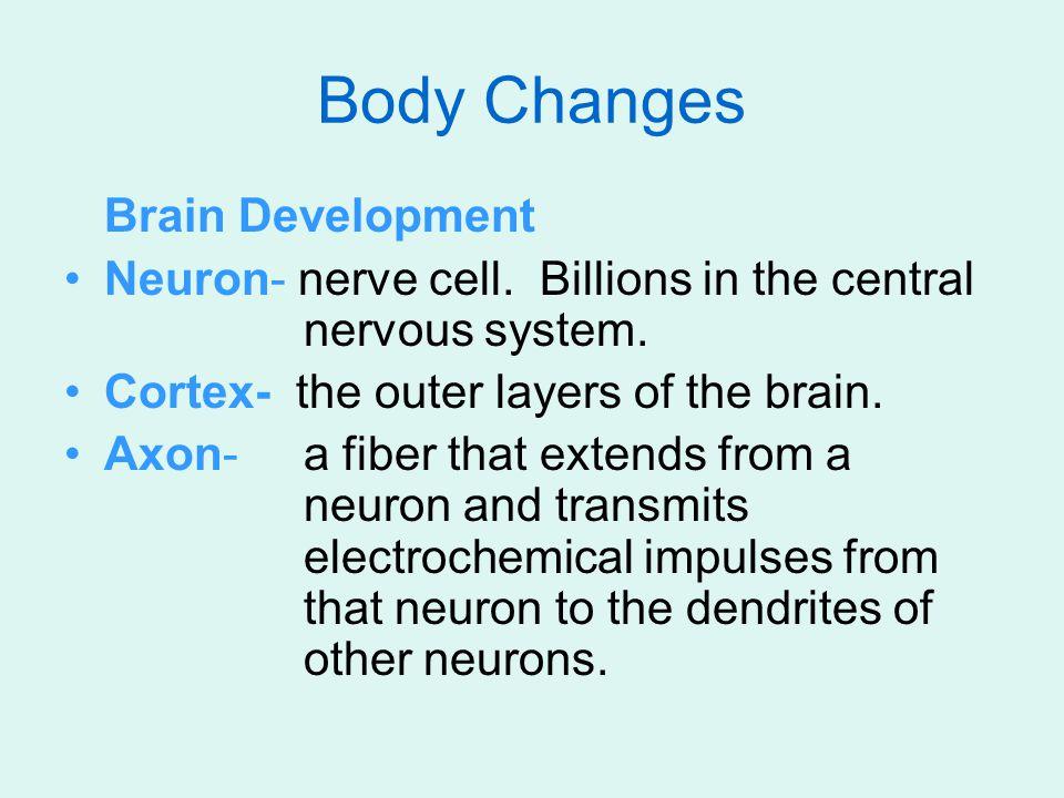 Body Changes Brain Development