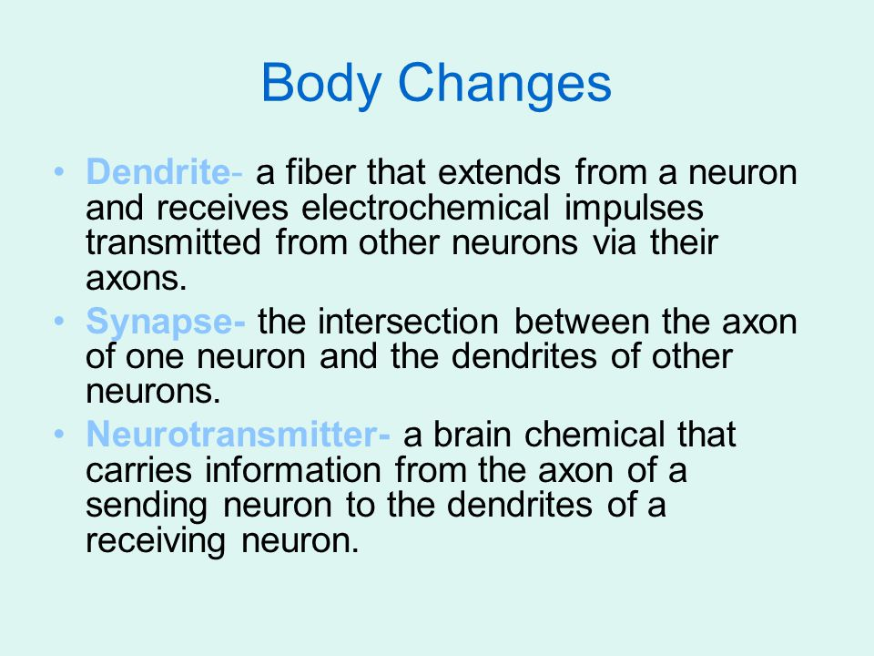 Body Changes Dendrite- a fiber that extends from a neuron and receives electrochemical impulses transmitted from other neurons via their axons.