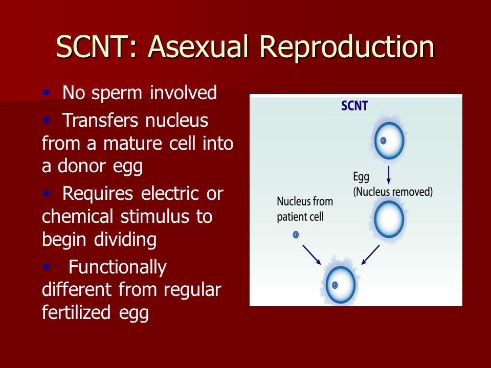 SCNT: Asexual Reproduction