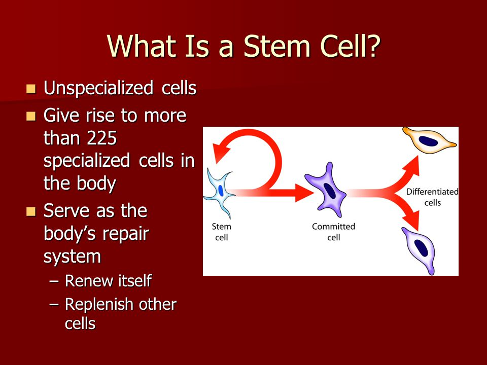 What Is a Stem Cell Unspecialized cells
