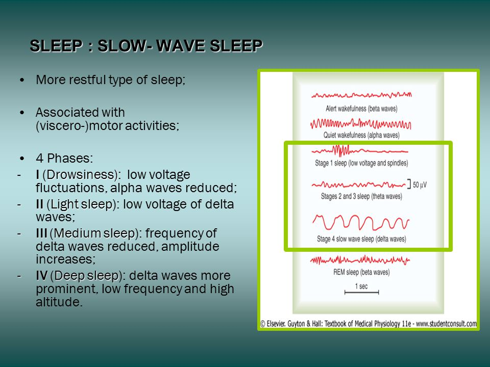 SLEEP : SLOW- WAVE SLEEP