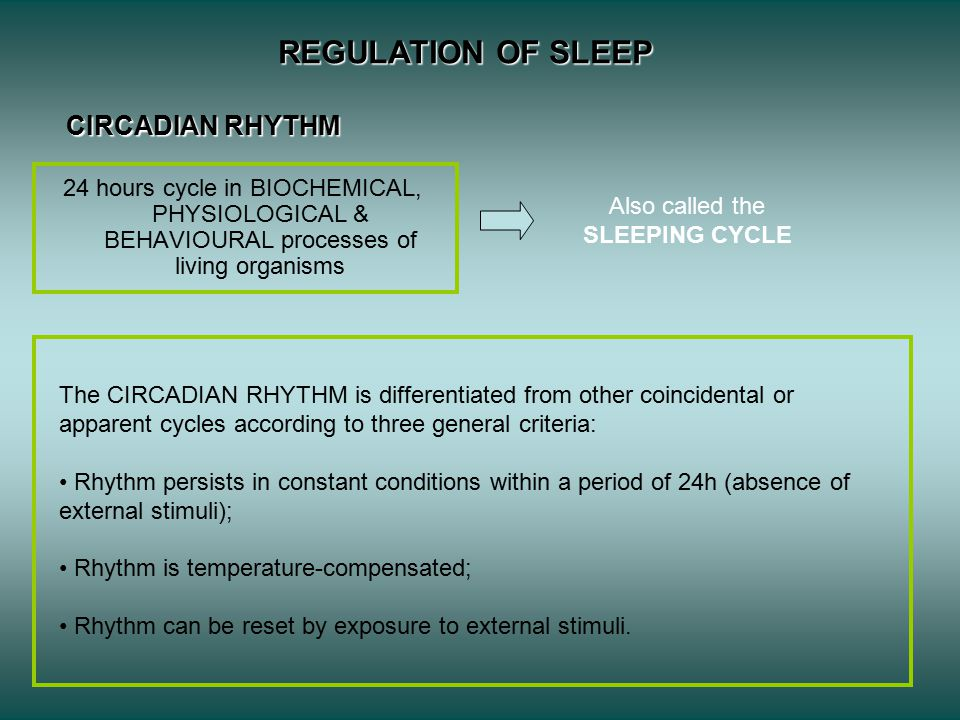 Also called the SLEEPING CYCLE