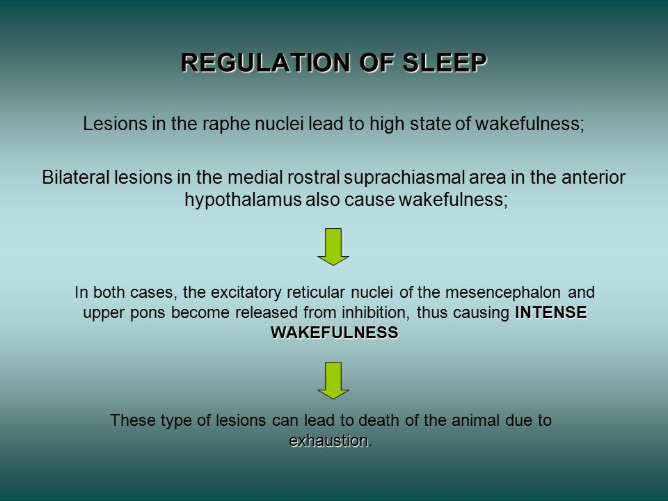 Lesions in the raphe nuclei lead to high state of wakefulness;