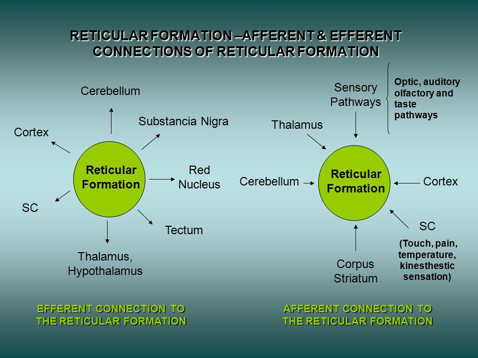 RETICULAR FORMATION –AFFERENT & EFFERENT CONNECTIONS OF RETICULAR FORMATION