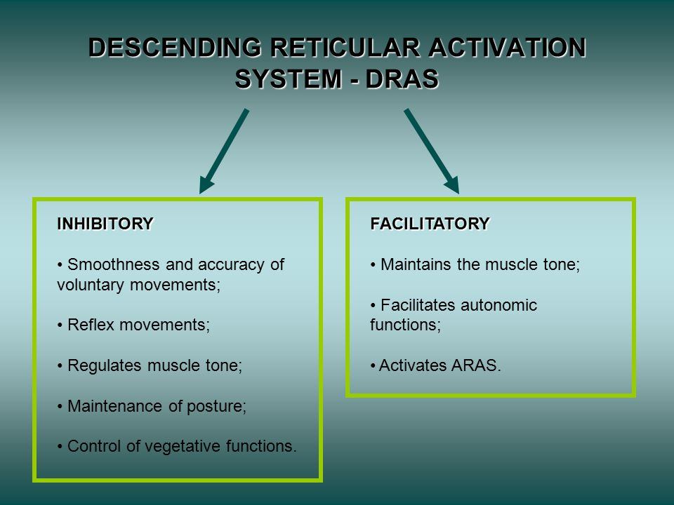 DESCENDING RETICULAR ACTIVATION SYSTEM - DRAS