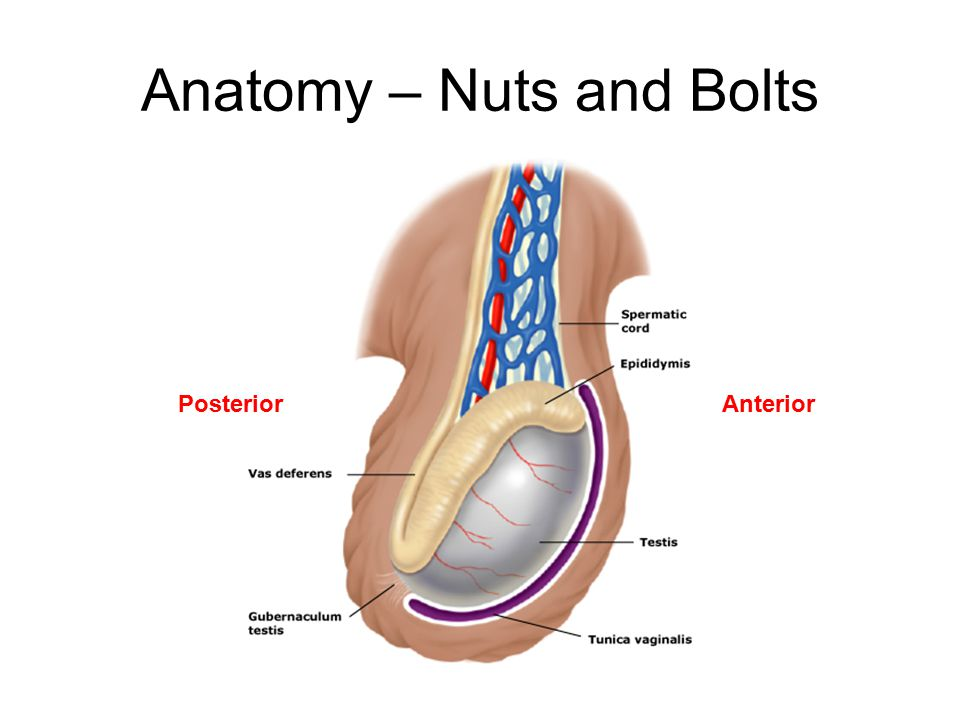 Anatomy – Nuts and Bolts