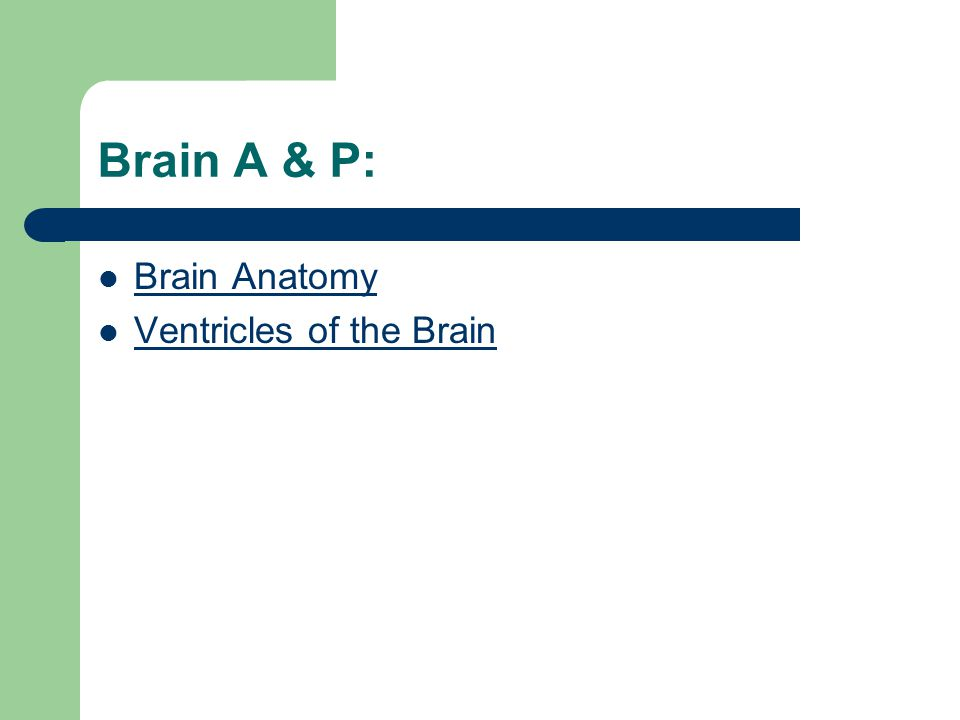 Brain A & P: Brain Anatomy Ventricles of the Brain