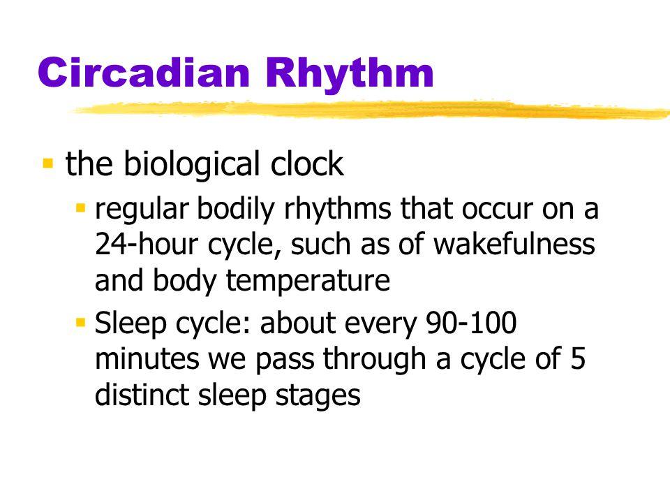 Circadian Rhythm the biological clock