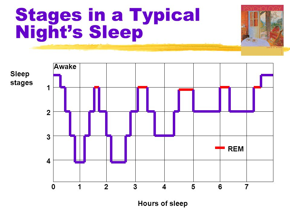 Stages in a Typical Night's Sleep
