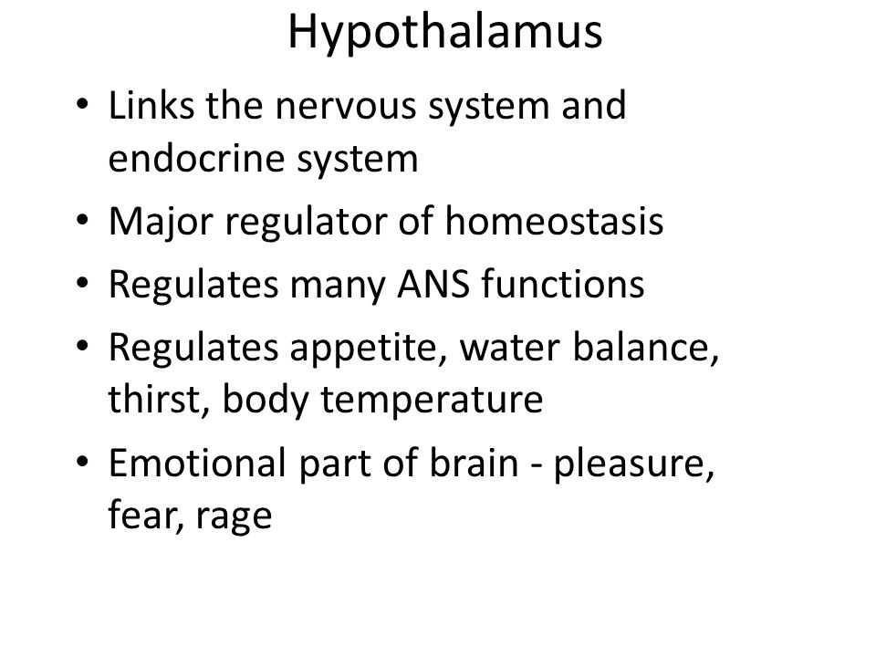 Hypothalamus Links the nervous system and endocrine system