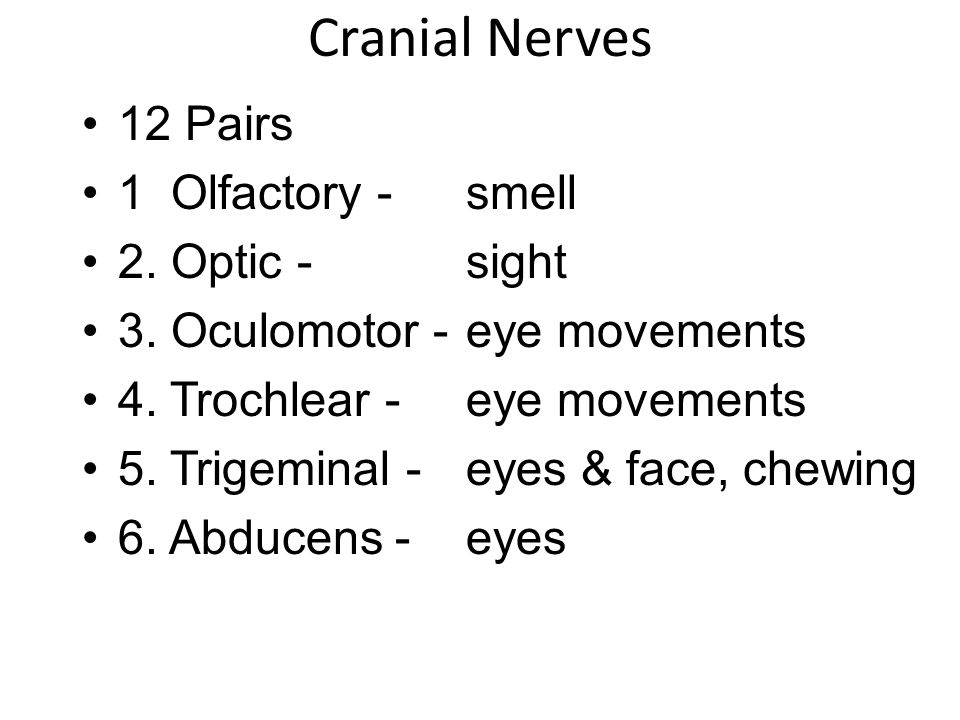 Cranial Nerves 12 Pairs 1 Olfactory - smell 2. Optic - sight