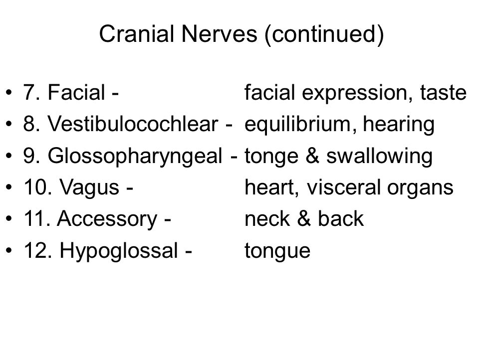 Cranial Nerves (continued)