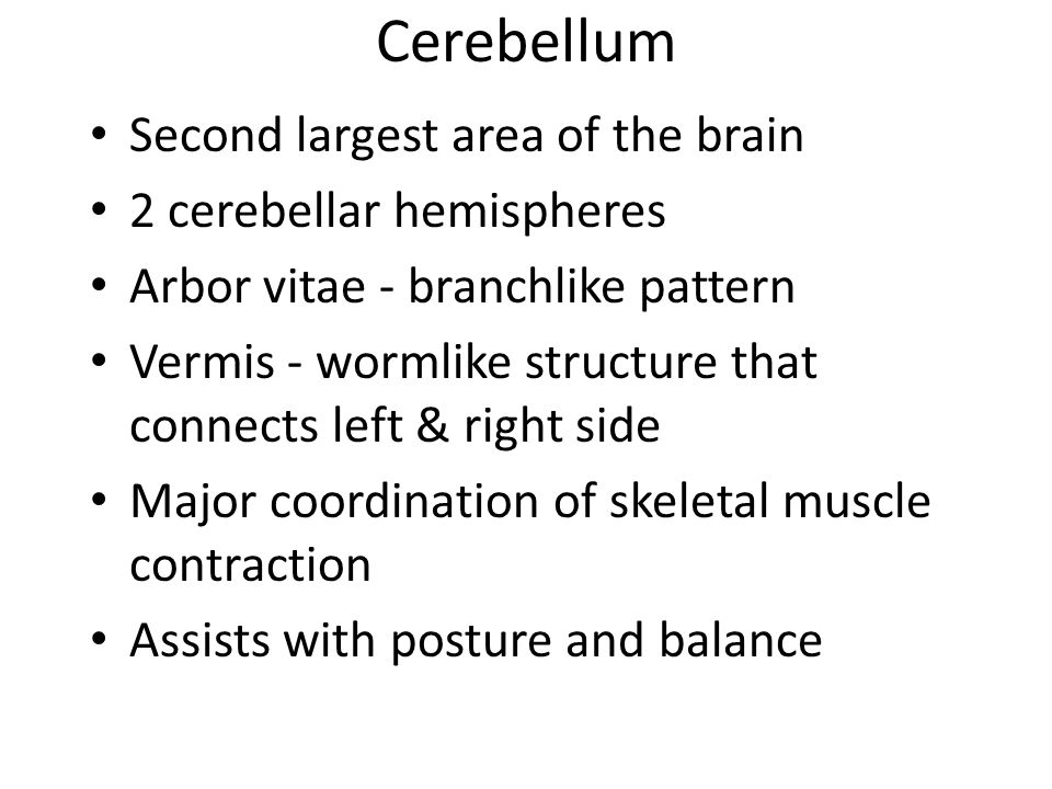 Cerebellum Second largest area of the brain 2 cerebellar hemispheres
