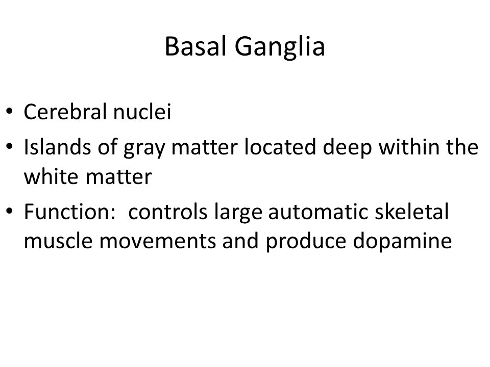 Basal Ganglia Cerebral nuclei