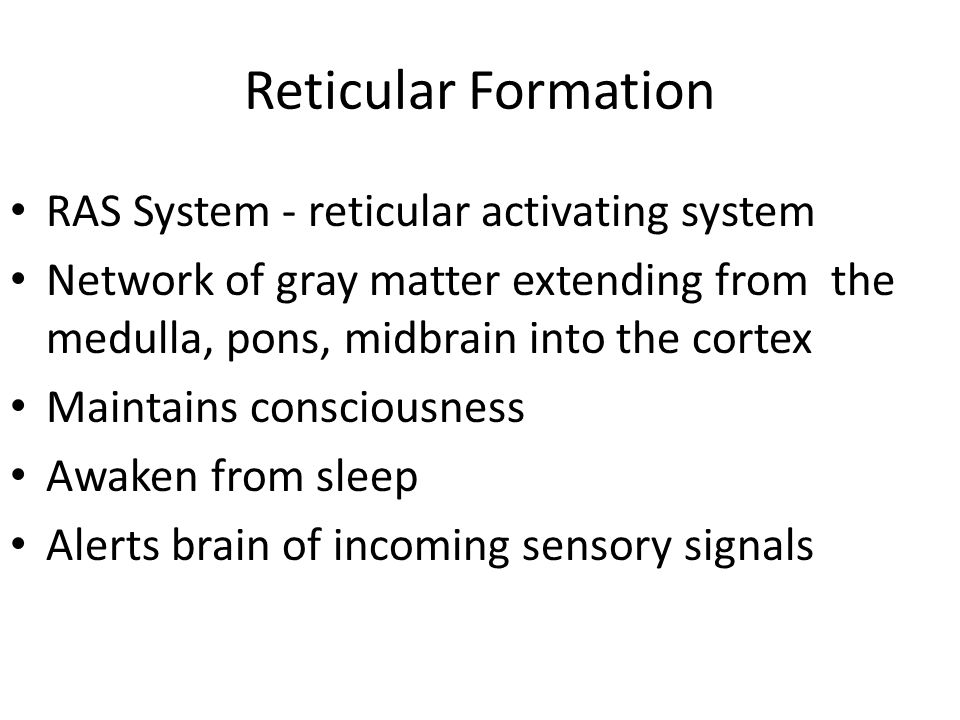 Reticular Formation RAS System - reticular activating system