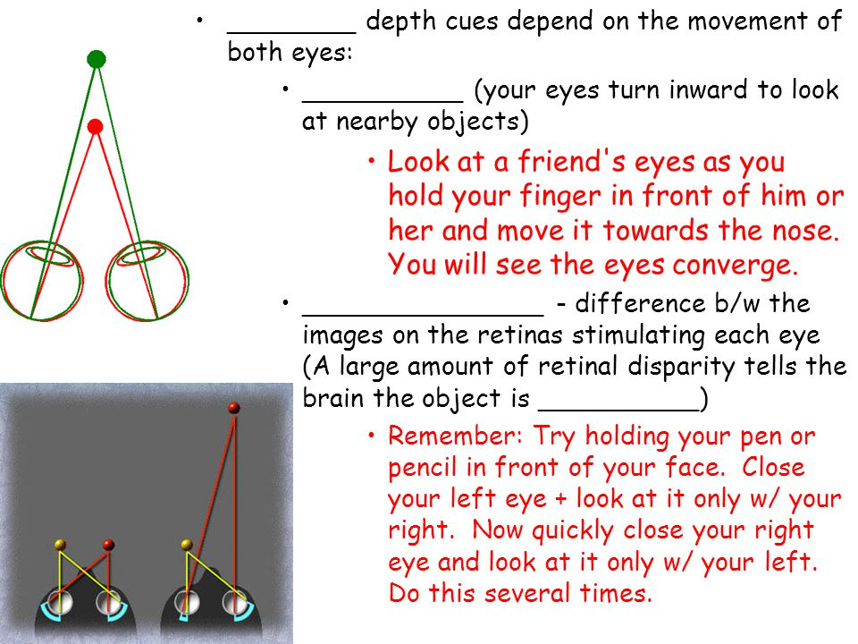 ________ depth cues depend on the movement of both eyes: