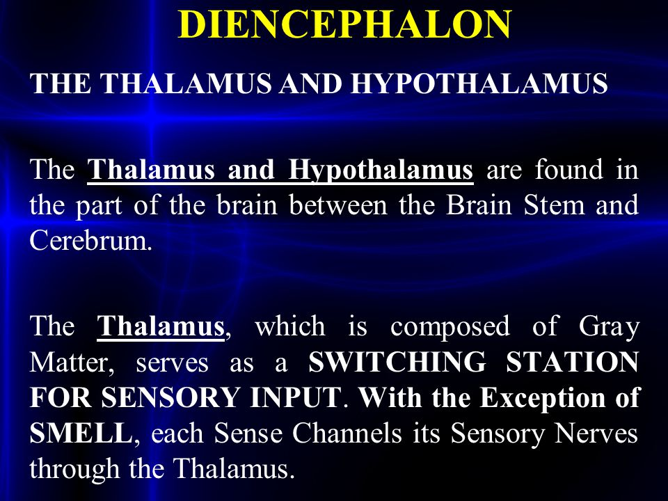 DIENCEPHALON THE THALAMUS AND HYPOTHALAMUS