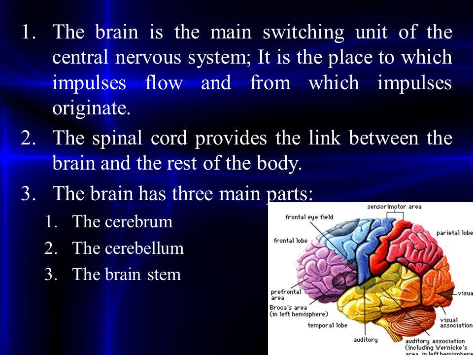 The brain has three main parts: