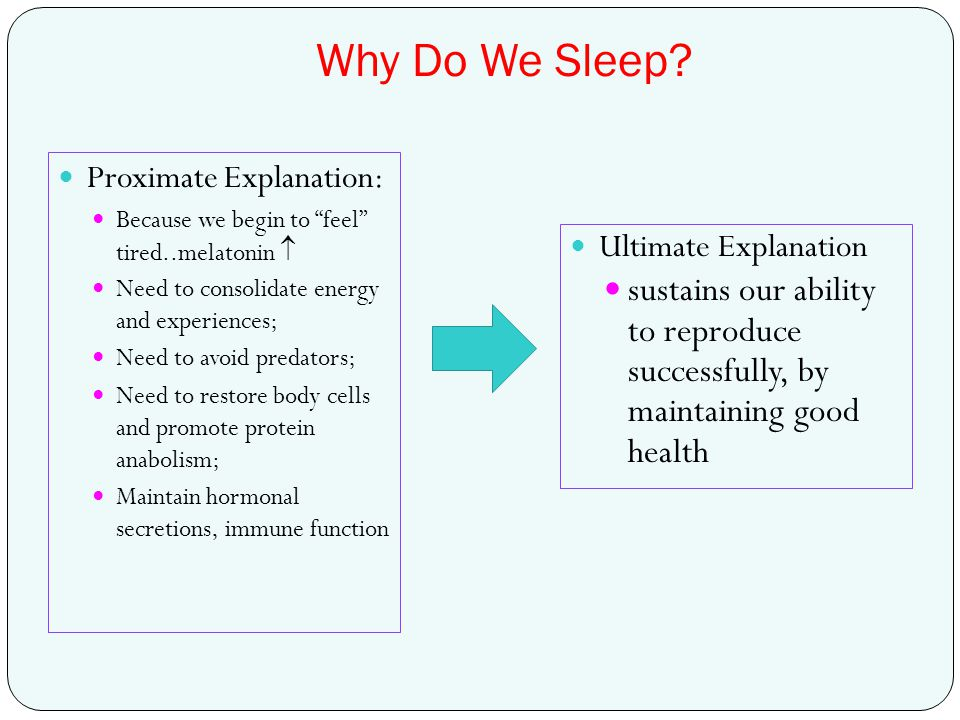 Why Do We Sleep Proximate Explanation: Because we begin to feel tired..melatonin  Need to consolidate energy and experiences;