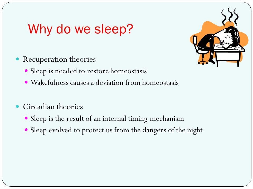 Why do we sleep Recuperation theories Circadian theories