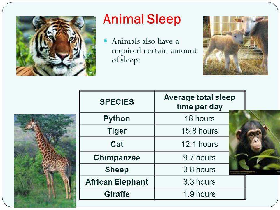 Average total sleep time per day