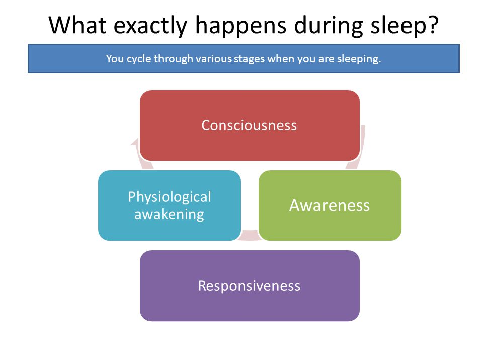 What exactly happens during sleep