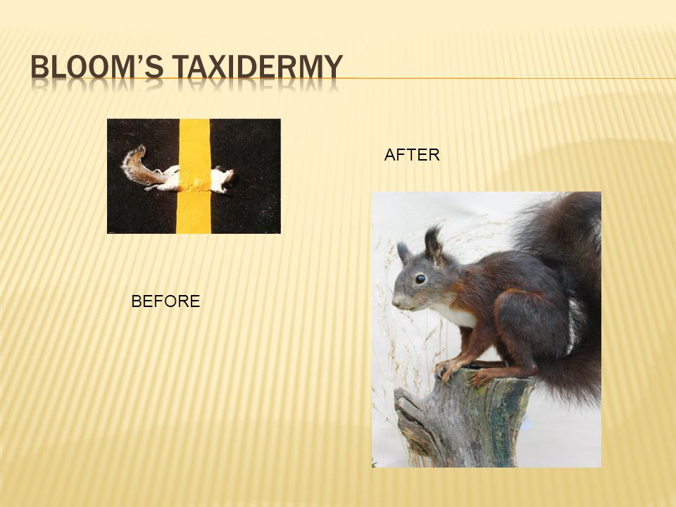 Bloom's Taxidermy AFTER BEFORE