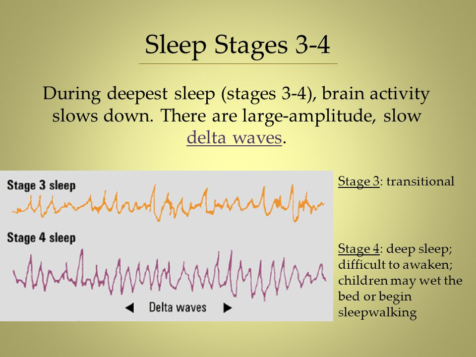 Sleep Stages 3-4 During deepest sleep (stages 3-4), brain activity slows down. There are large-amplitude, slow delta waves.