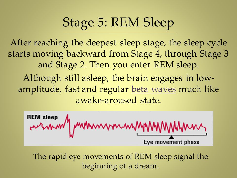 The rapid eye movements of REM sleep signal the beginning of a dream.