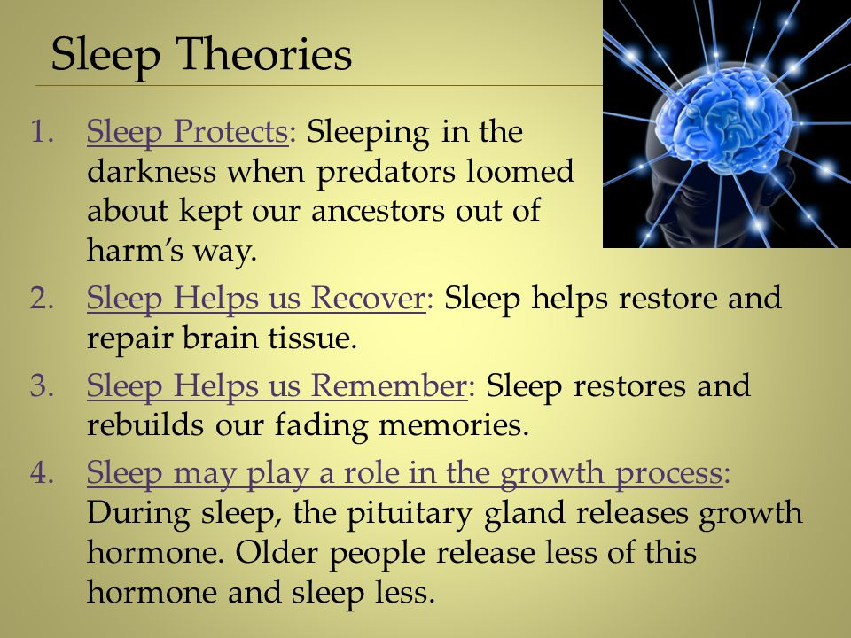 Sleep Theories