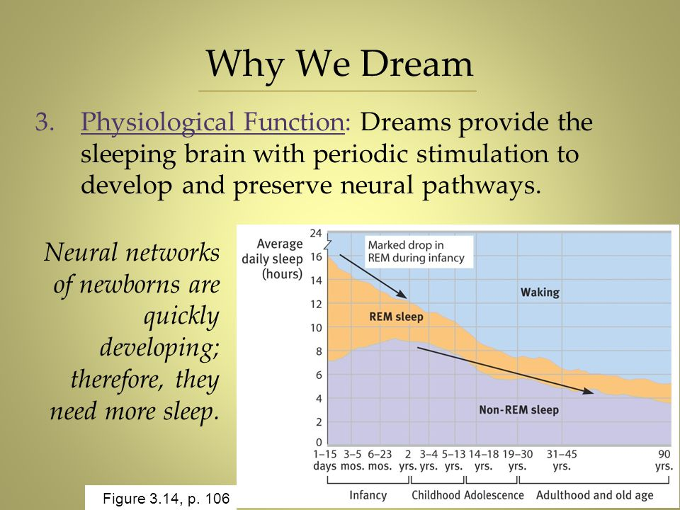 Why We Dream Physiological Function: Dreams provide the sleeping brain with periodic stimulation to develop and preserve neural pathways.