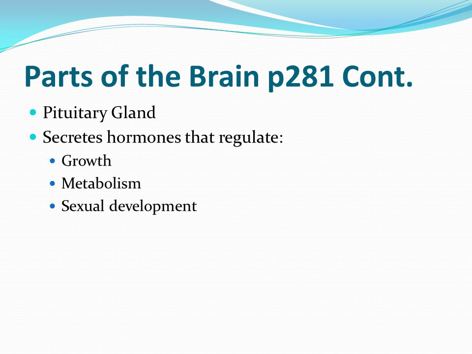 Parts of the Brain p281 Cont.