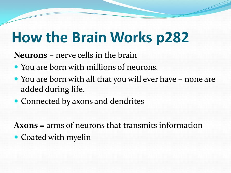 How the Brain Works p282 Neurons – nerve cells in the brain