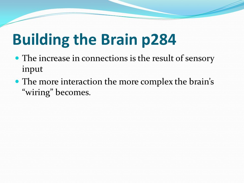 Building the Brain p284 The increase in connections is the result of sensory input.