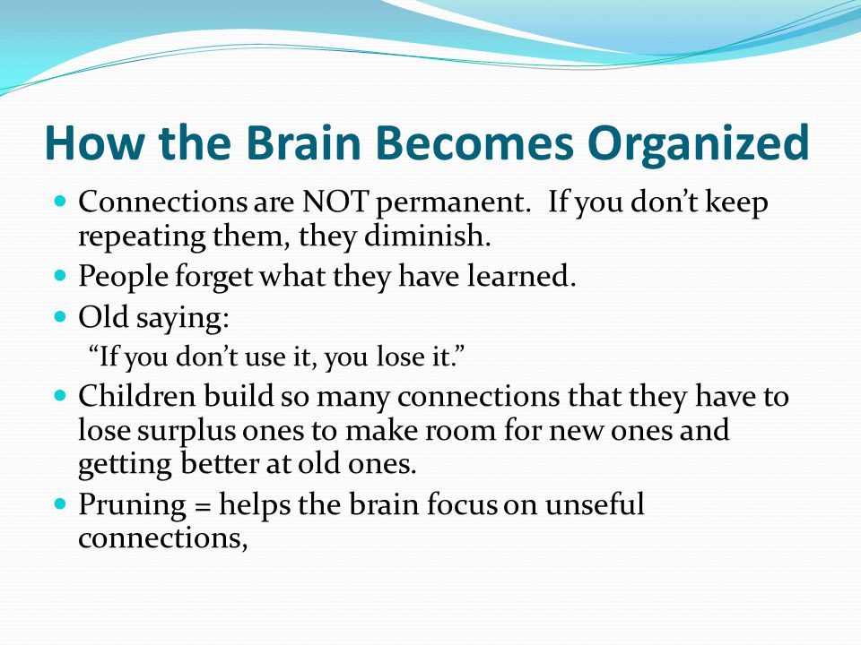 How the Brain Becomes Organized