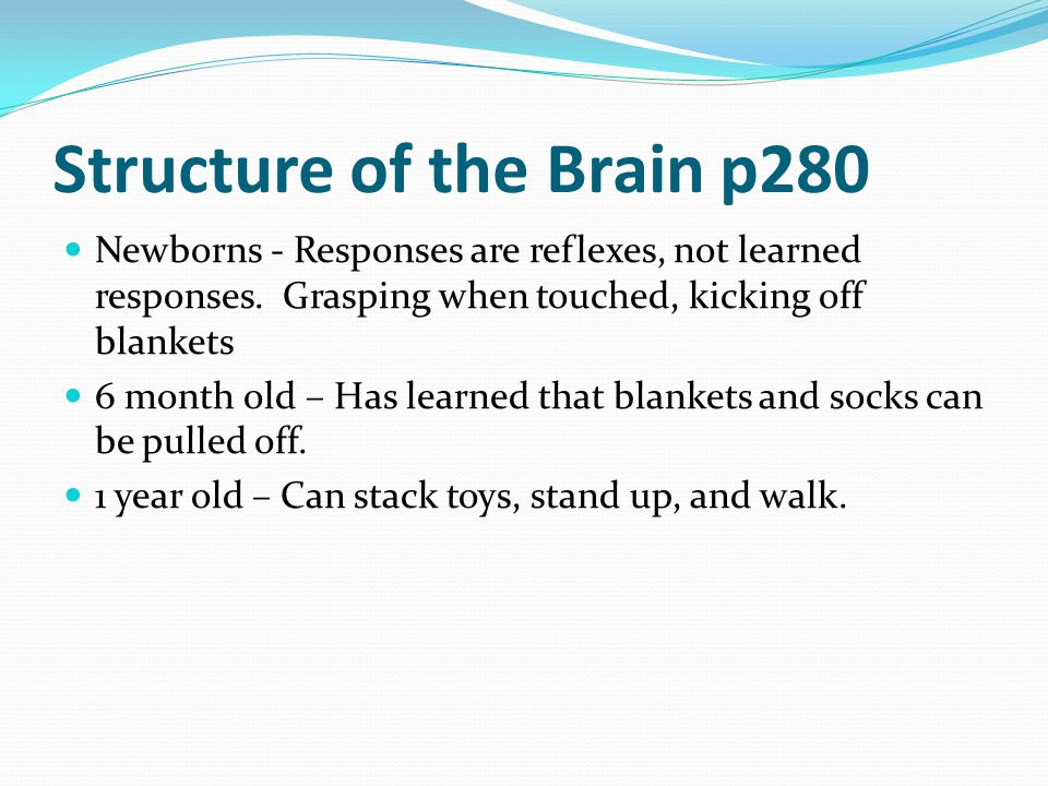 Structure of the Brain p280