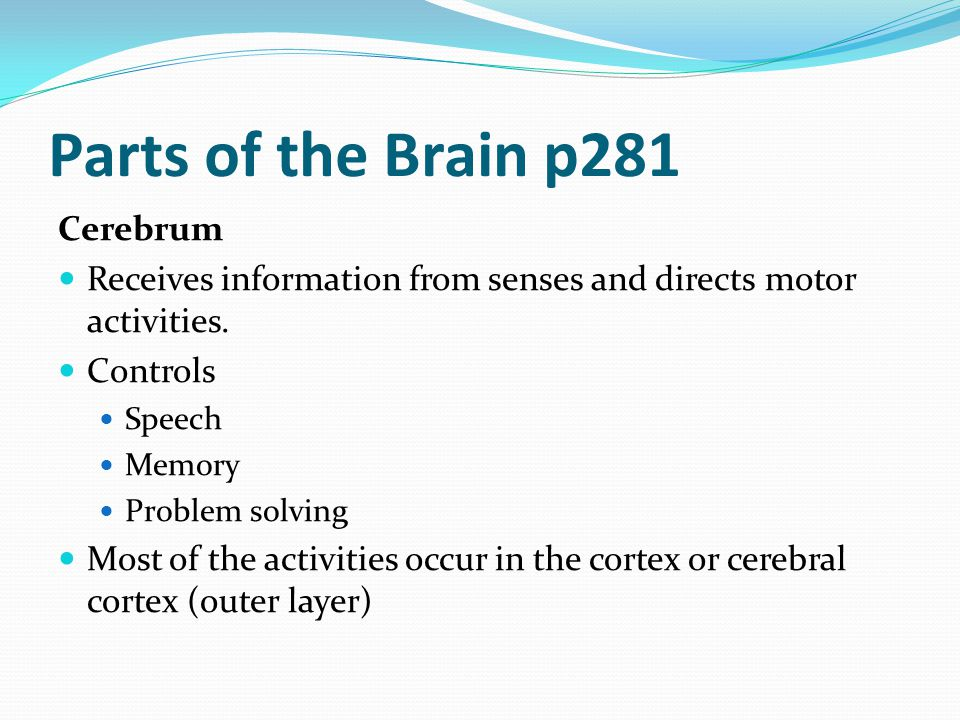 Parts of the Brain p281 Cerebrum
