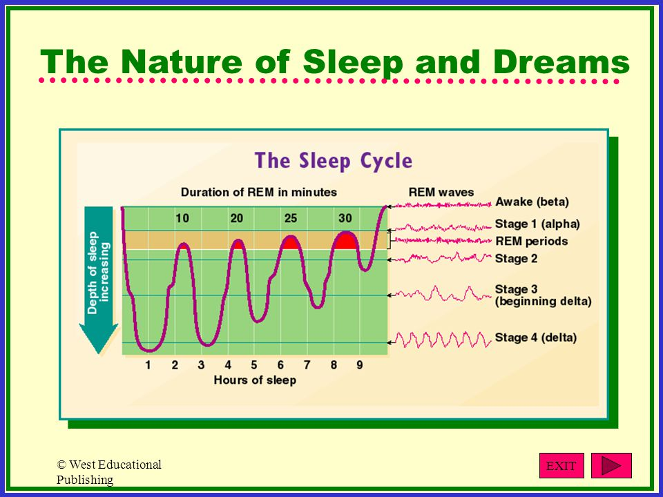 The Nature of Sleep and Dreams